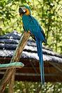 Parrot ESL Vocab Act 1 Oct 17 2019 ---.j