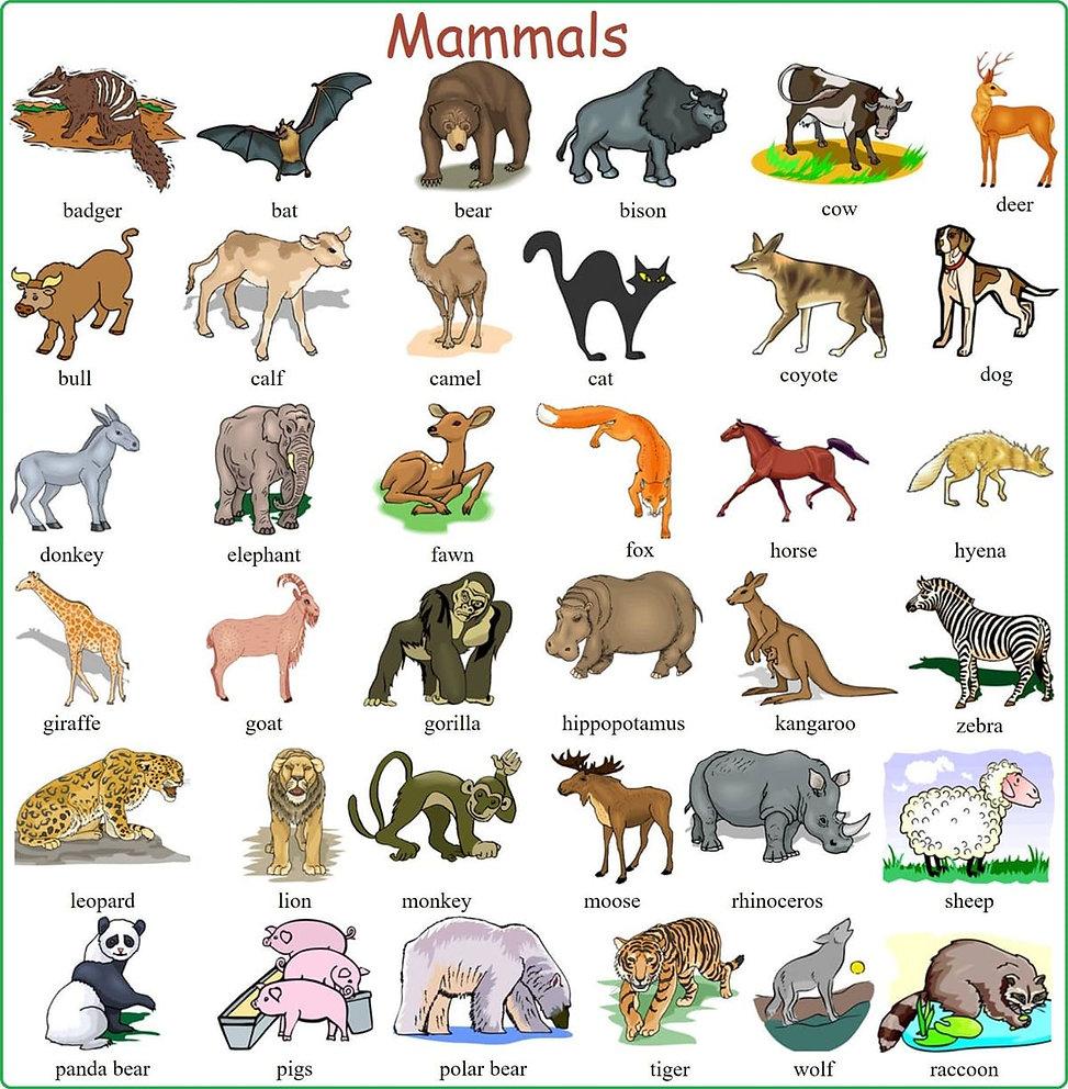 Mammals - Dec 22 2020.jpg
