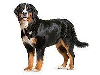 Dog ESL Vocab Act 1 Oct 17 2019 ---.jpg