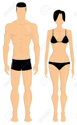 A1-A2 - Human Body - Male and Female - A