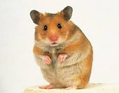 Hamster ESL Vocab Act 1 Oct 17 2019 ---.