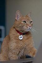 Morris the cat 9 lives --- ESL Vocab Act