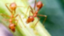 Ants Red - Feb 9 2020.jpg