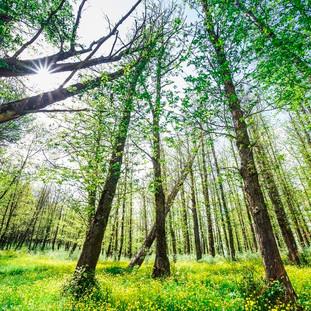big_bosco_di_floresta_cosa_vedere_parco_