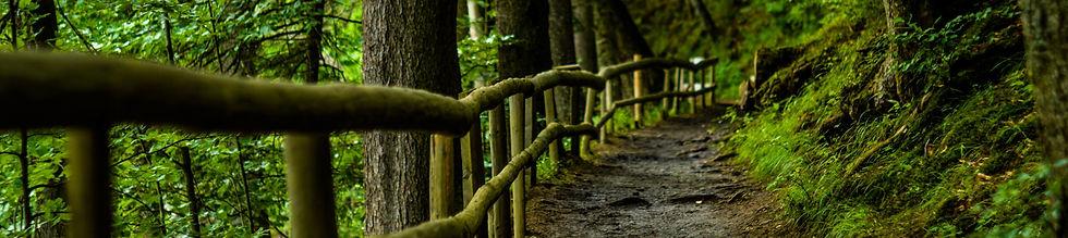 forest boundaries 4.jpg