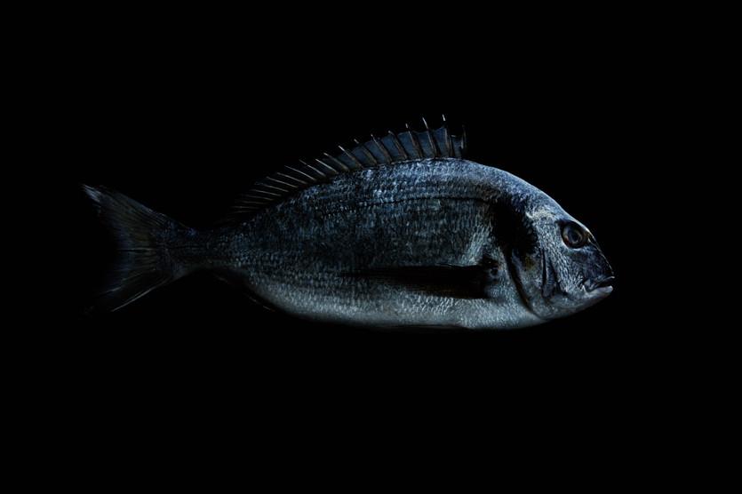 FishbyAlexBoard.jpg