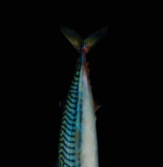 FishbyAlexBoard 76.jpg