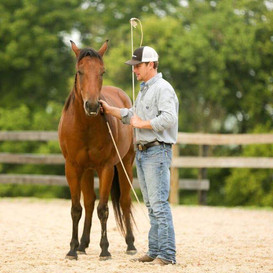 Josh working with a young horse at the Australian Equine Performance Centre in Kentucky, USA.