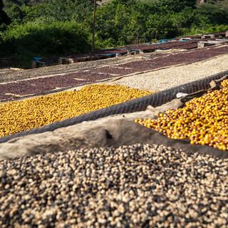 CoffeeFactory2.jpg