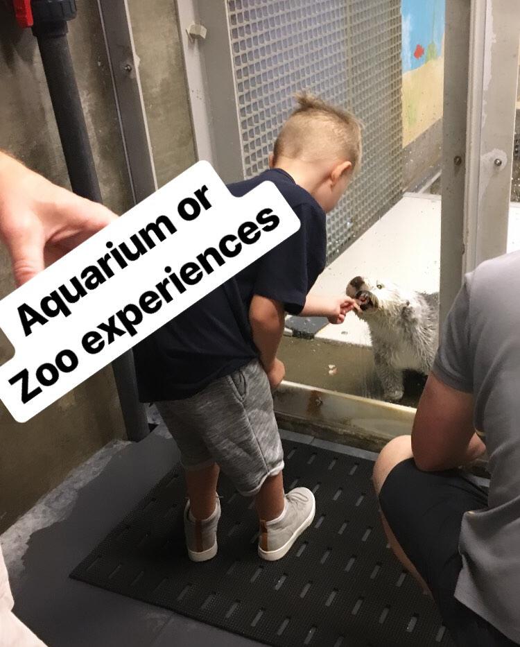 Aquarium or Zoo Encounter