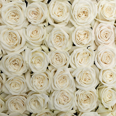 Playa Blanca Roses