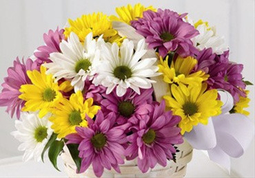 Assorted Daisies