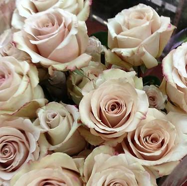Quicksand Roses