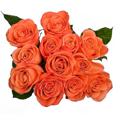 Orange Crush Roses