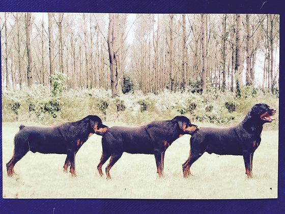 The original Dreihund pictures, signed!