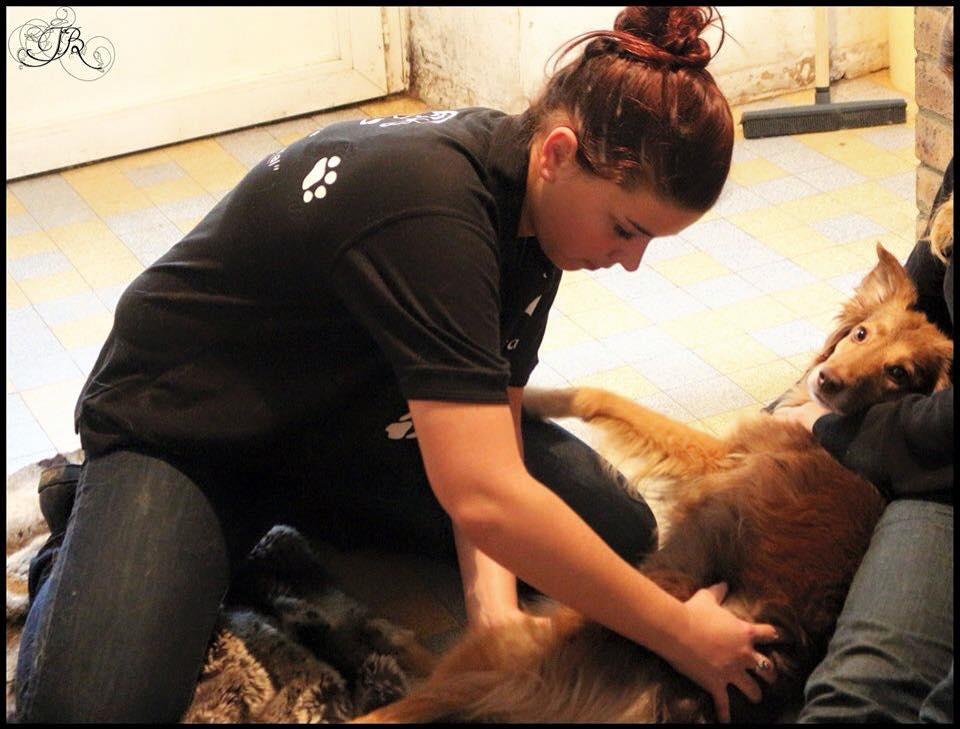 osteopathie chien 1