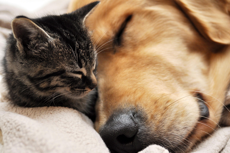 cat-and-dog-sleeping-wallpaper.jpg