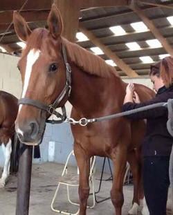 harmonisation enrgetique cheval