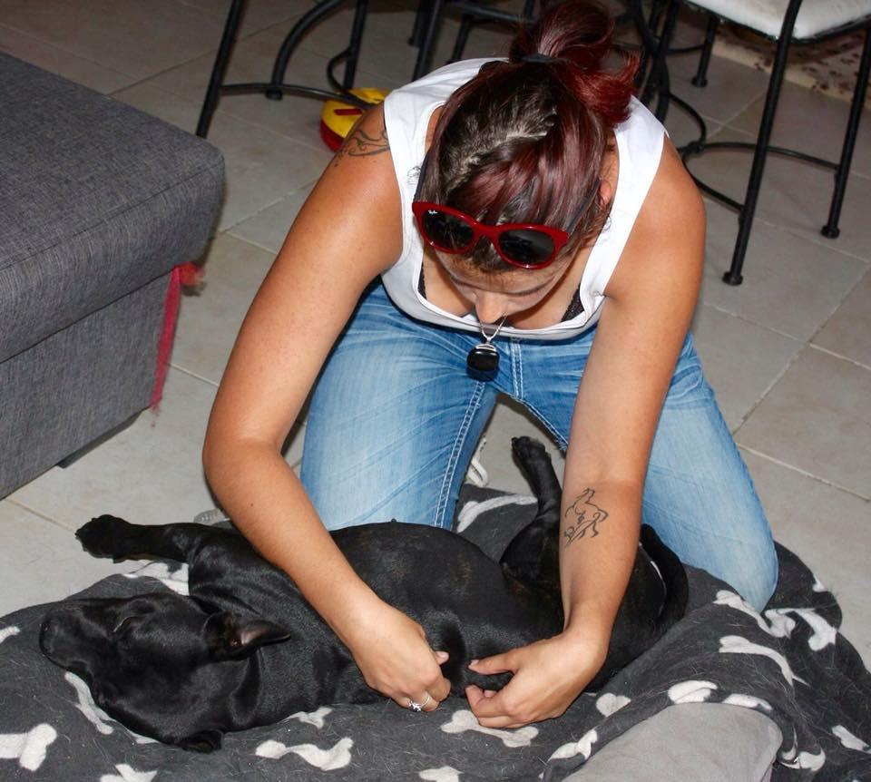 osteo staffie chien animanuel therapie emmanuelle lethon.jpg