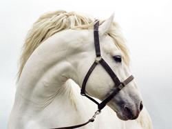 cheval_blanc-other.jpg