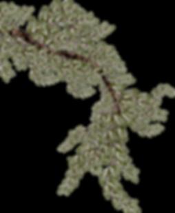 kisspng-twig-branch-wind-zen-branch-5aa6