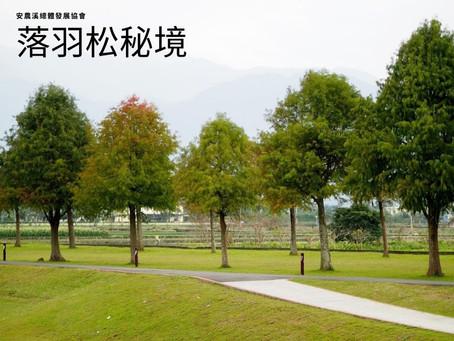 【安農溪紅葉情報】落羽松紅葉最前線 20191204