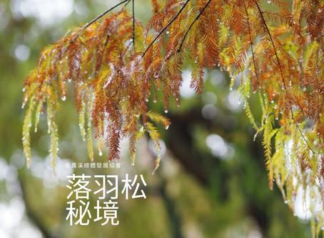 【安農溪紅葉情報】落羽松紅葉最前線 20191220