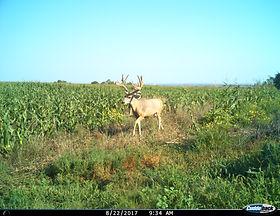 Archery Turkey hunting in Nebraska