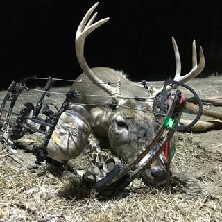2017 Whitetail Deer