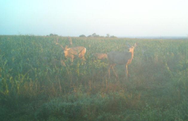 Archery Deer Hunting in Nebraska