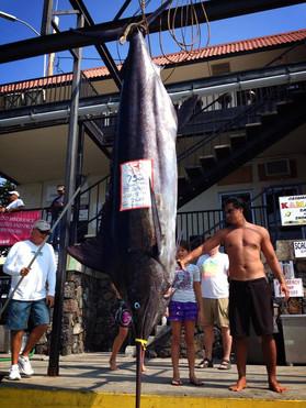 big black marlin.jpg