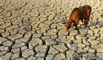 Drought Impacts Livestock & Agriculture