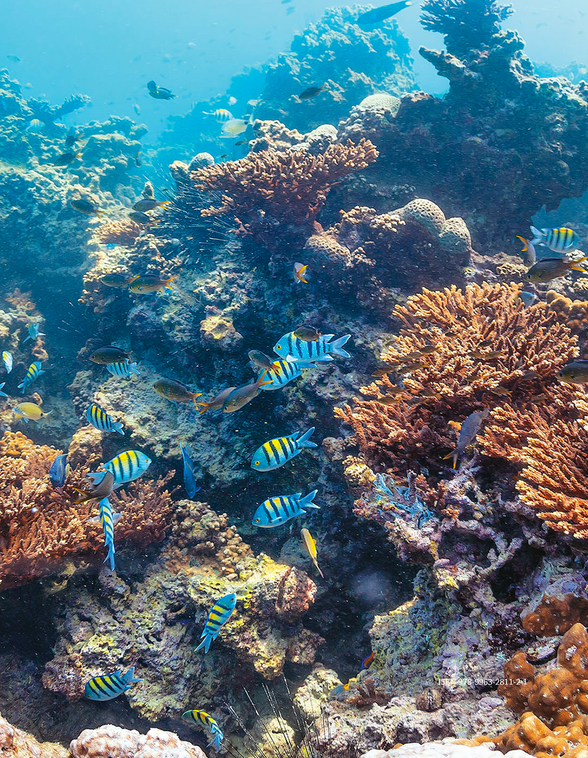 Kuwait Coral Reefs