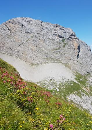 Mutthorn mit Alpenrosen