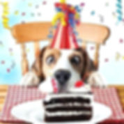 beagle-birthday-card-sniff-the-cake-funn