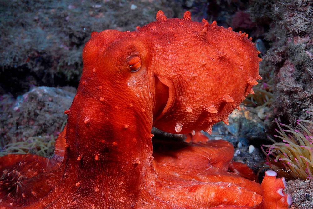 Oktopus pflanzenbasierte  Ernährung und Yoga