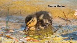 Spring_SimonMellor