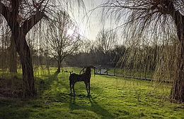Stag-Willow-sculpture.jpg