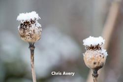 Winter_ChrisAvery