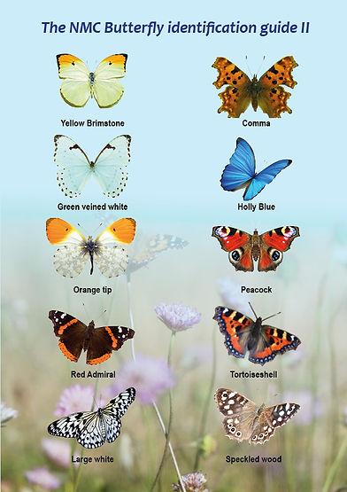 Butterfly-guide.jpg