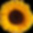 sunflr1.png