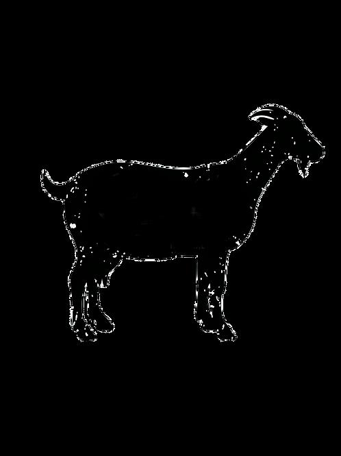 Chivo/Goat