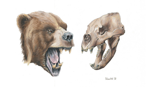 Short Faced Bear Reconstruction