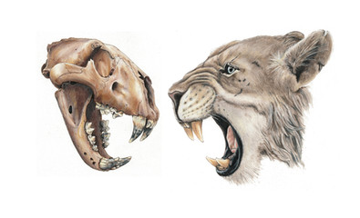 North American Cave Lion