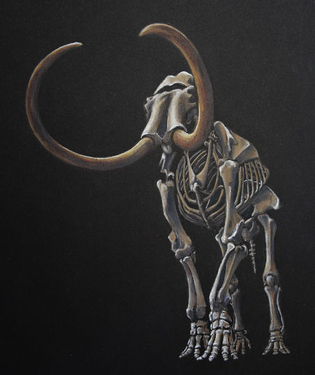 Feature 7 Mammoth Skeleton.jpg