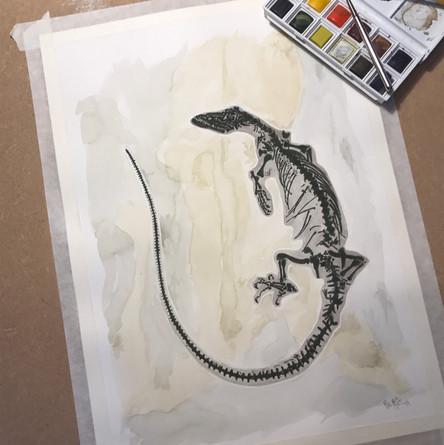 Giant Monitor Lizard