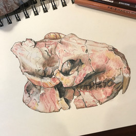 Eporeodon major