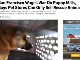 「ペットショップではレスキュードッグのみ販売可」サンフランシスコ市の英断