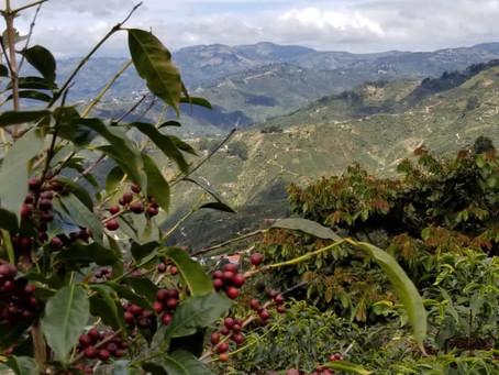 Proyecto finca de café. San José,Costa Rica