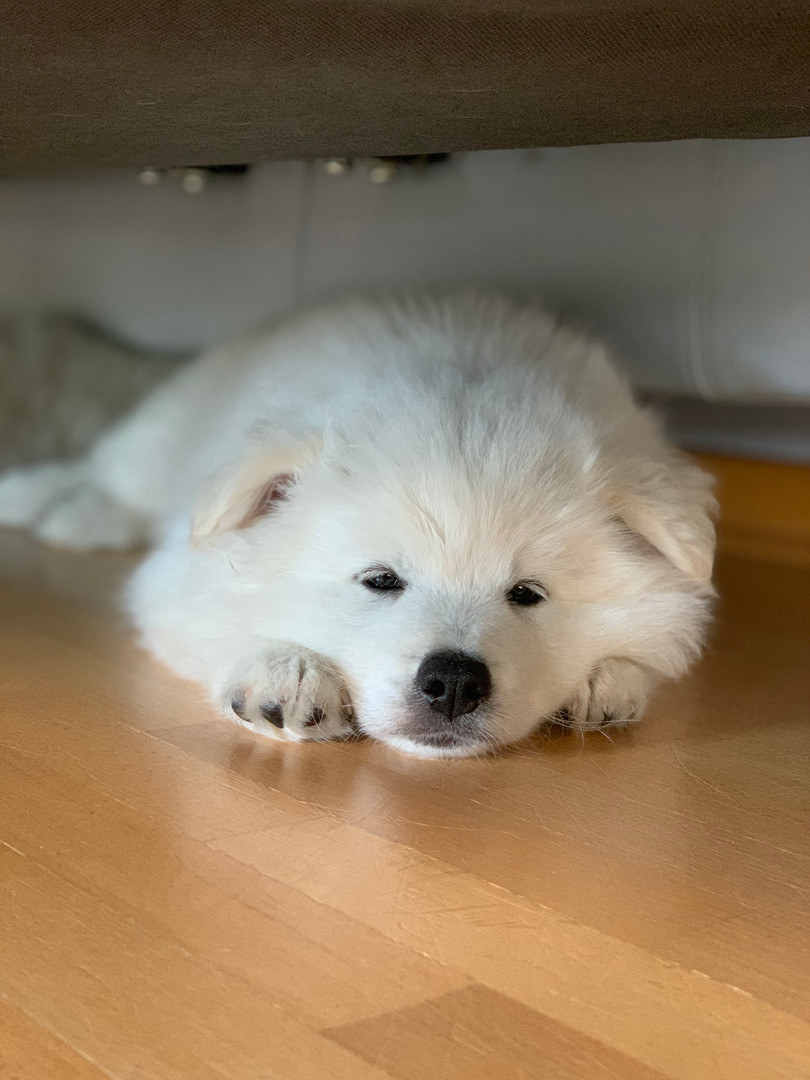 Alois im Mittagsschlaf.jpeg